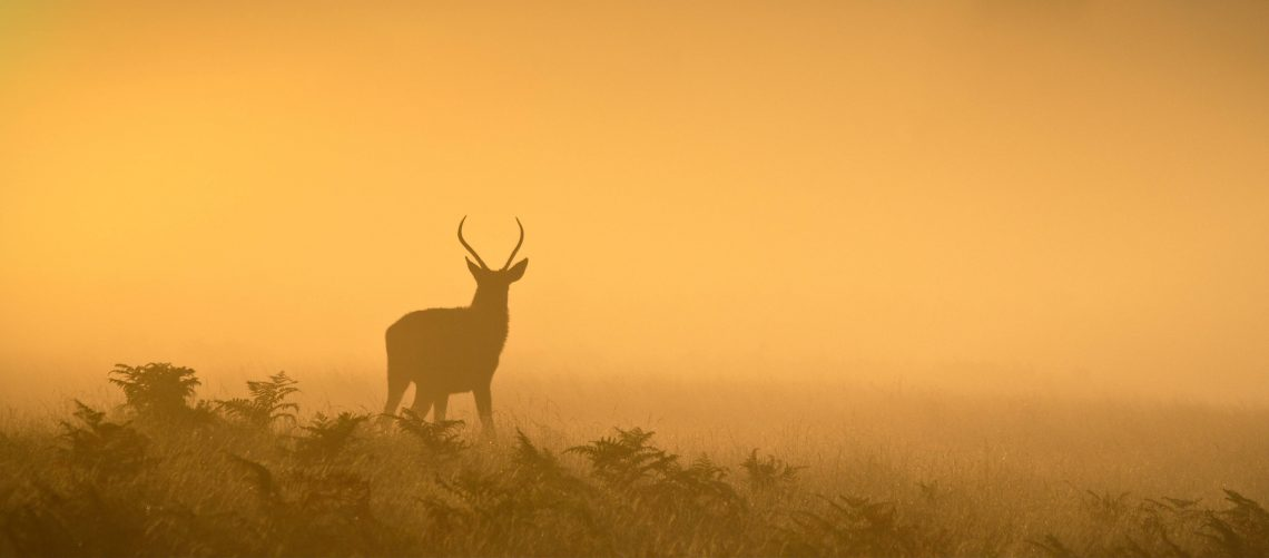 8_Juvenile Stag on a Misty Morning_SHARPEN